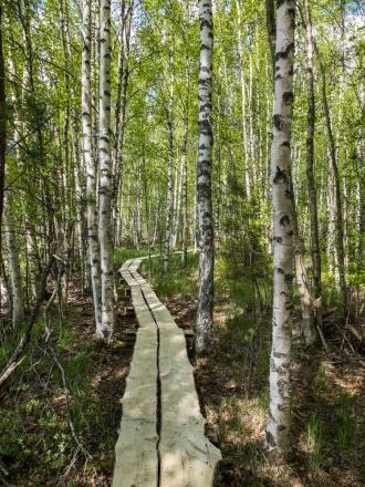 Wide log trails were nice